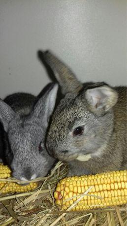 Продам кроликов 85 грн шт