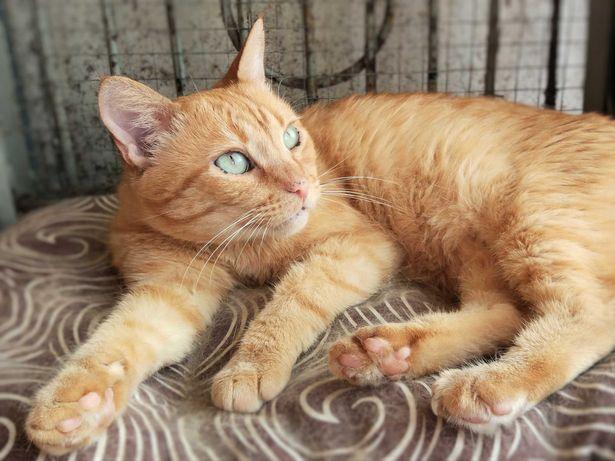 Спасите из приюта интеллигентного кота 11 месяцев кастрирован
