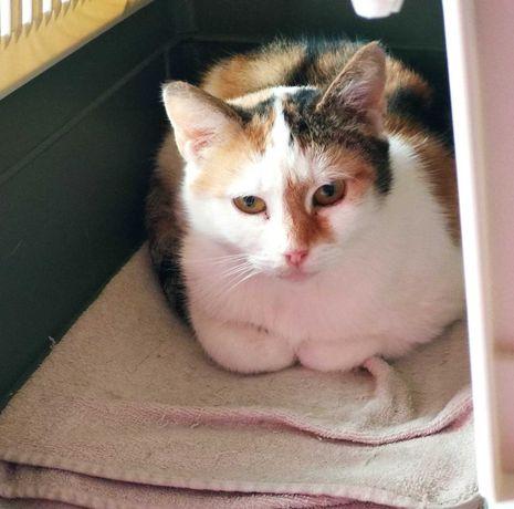 spokojna koteczka Mila