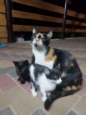 Отдам в добрые руки троих котят