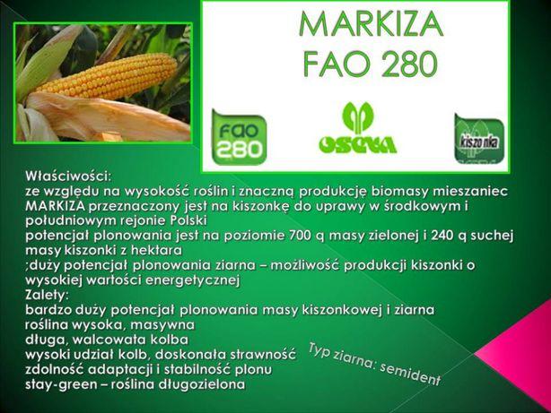 Kukurydza MARKIZA FAO 280 (80 tys. nas.) KUKURYDZA JAK LAS
