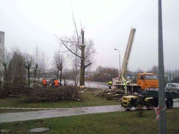 Wycinka przycinka ścinka obcinka drzew gałęzi drzewa koron rebak