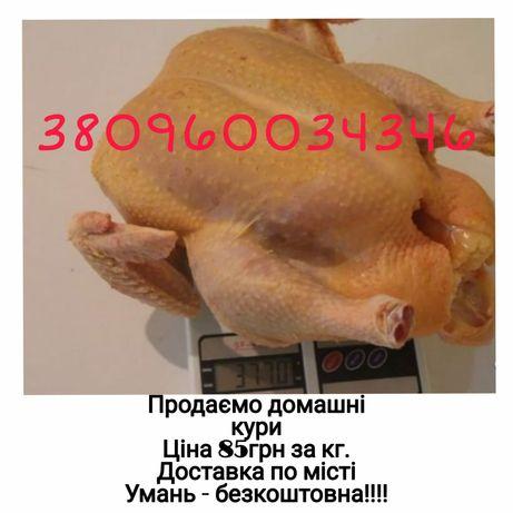 Домашні кури . Куряче м'ясо.