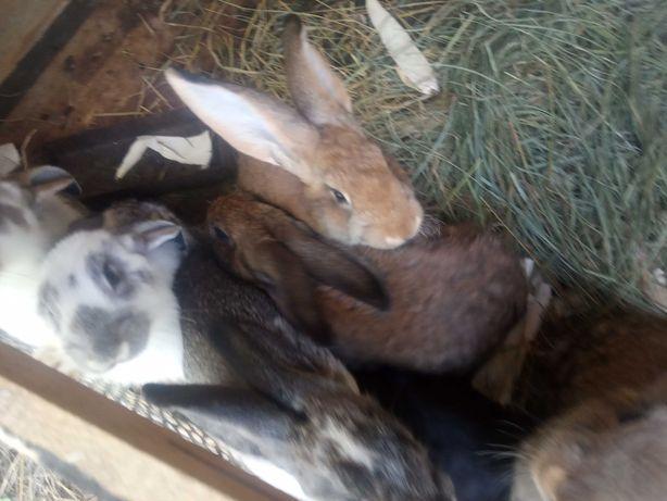 Продам кролики з власної ферми