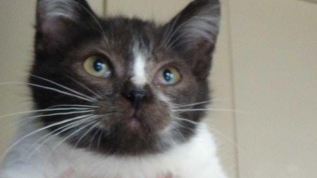 Котенок 2,5 месяца