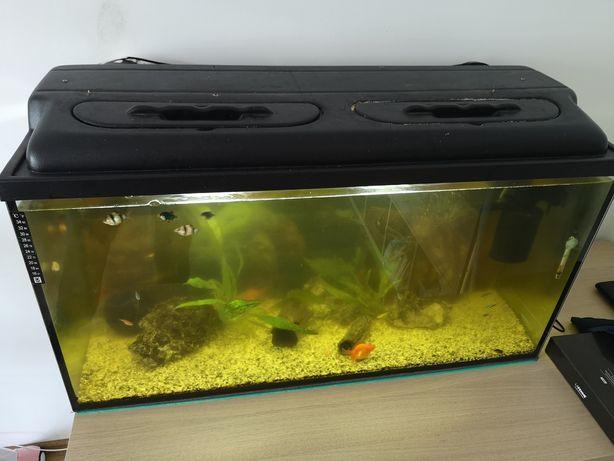 Akwarium 200l Zestaw