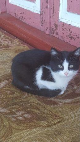 Котик (мальчик) в добрые руки Бахмач