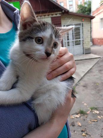 Котята 3 месяцев