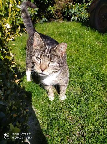 Cudowna kotka pieszczoszka szuka domku!
