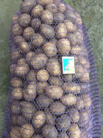 Продам насінєву картоплю Арізона