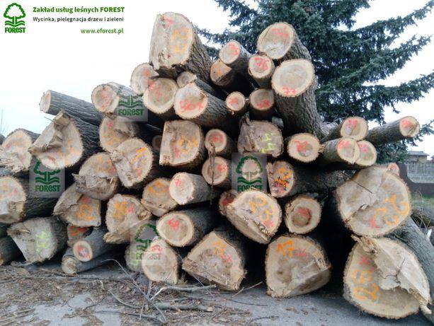 Szacunek brakarski, wycena drewna, szacowanie jakości drewna na pniu