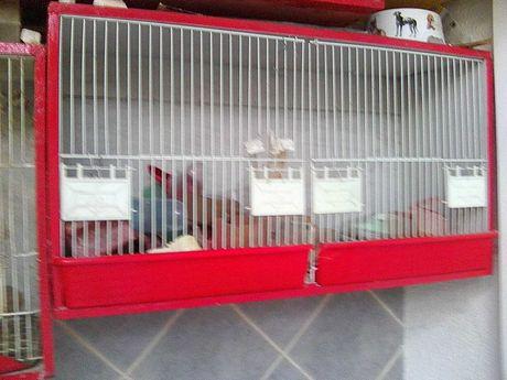 Gaiolas viveiro  para criação de aves