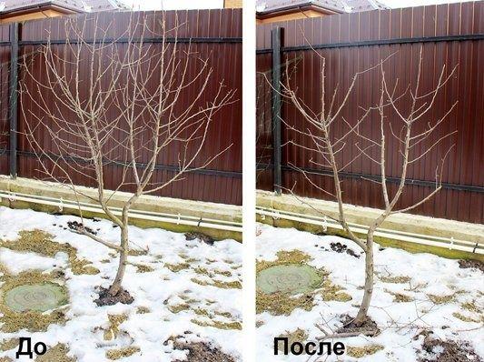 Обрезка Сада от 30 грн за дерево