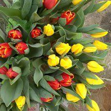 предлагаю тюльпаны ,гиацинты и крокусы к 8 марта