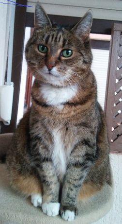 Zaginęła 14-letnia kotka Misia - nagroda za znalezienie 2000 zł !!!