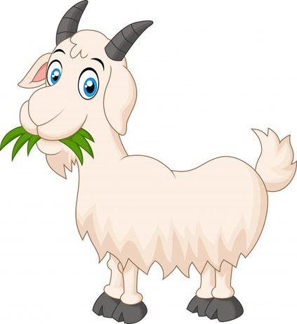 Продам свійські кози