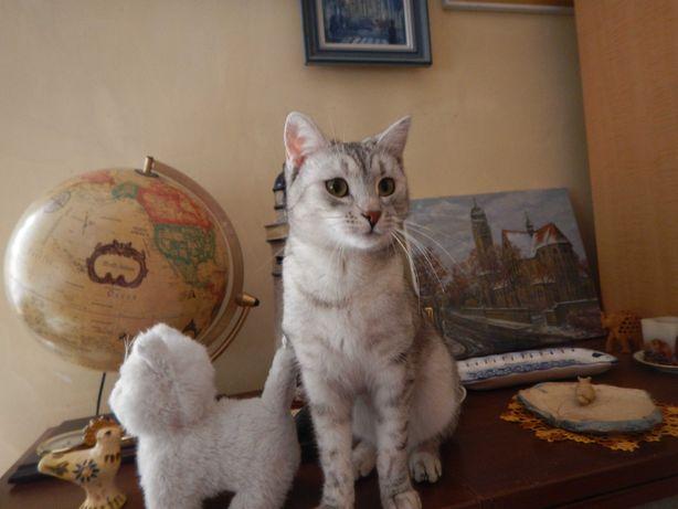 Zaginął kot w okolicy Ligoty Prószkowskiej, w woj. Opolskim