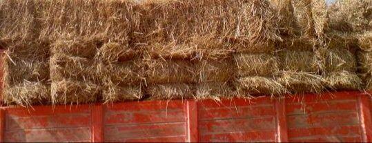 Faordos de palha de trigo