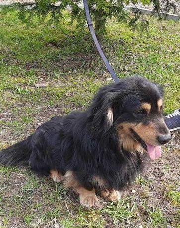 Pies szuka domu- oddam psa- Prezes