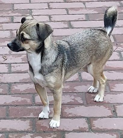 MUZA – prześliczna psia kruszynka