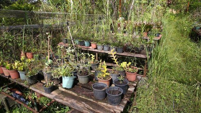 Plantas   frutos e flores