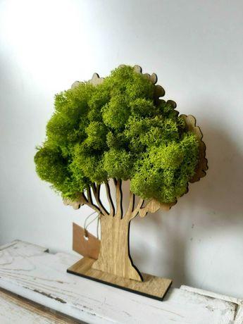 Drzewko z mchu chrobotka mech chrobotek drzewka stojące obraz 3D