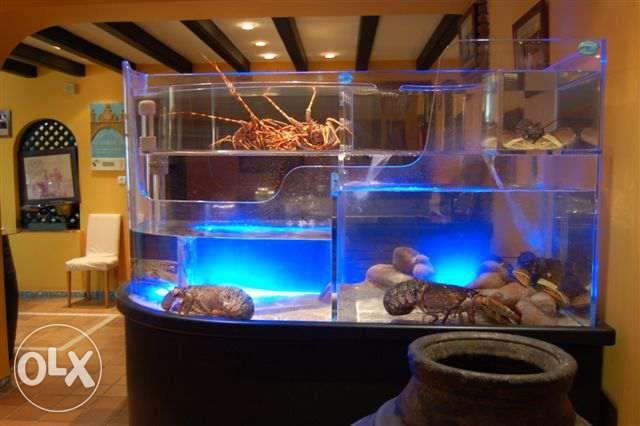 aquário para Sapateiras, lagosta, lavagante