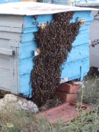 Пчелопакеты для себя