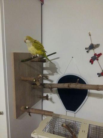 Zabawka dla papugi plac zabaw nowa