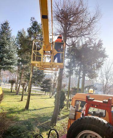 Wycinka , pielęgnacja  drzew, koszenie,  Elbląg ,Pasłęk, Braniewo ...