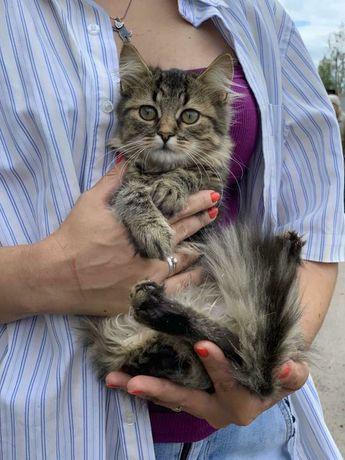 Невероятно эый мальчик Кинг ищет дом котенок котята кошеня кот кошка