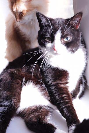 Кошка, котята беслатно в добрые руки, Киев Грюмкет,