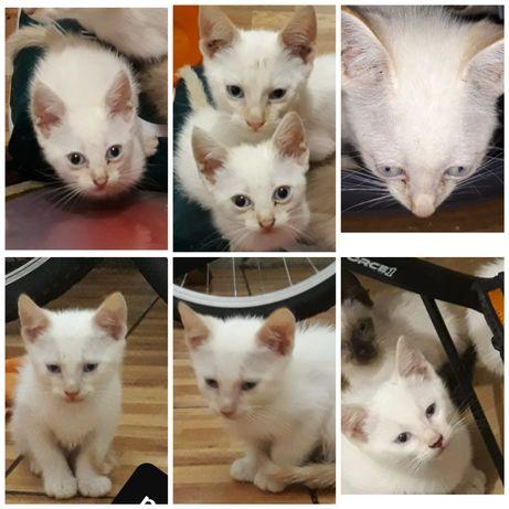 Gatos bebes para adoção brancos