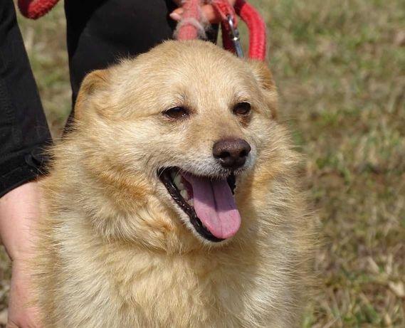 Apis- nieduży, kochany psiak szuka domu