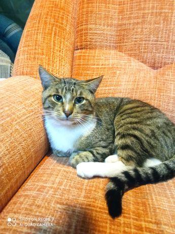 Самый лучший кот в мире умный , ласковый