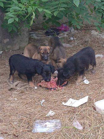 Бездомные щеночки мечтают о семье!