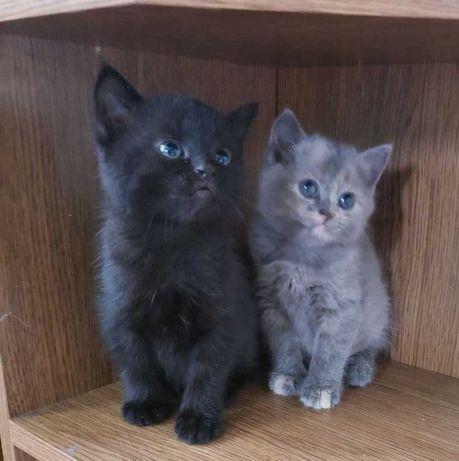 Милі кішечки в добрі руки