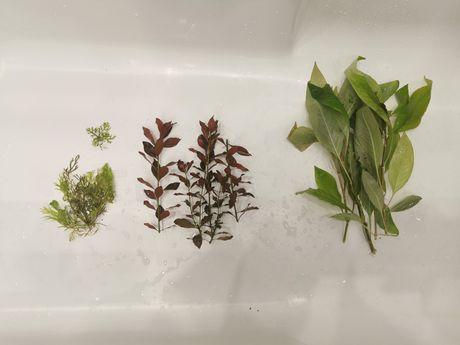 Rośliny akwariowe 3 rodzaje