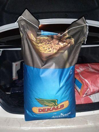 Семена кукурузы Монсанто,Monsanto 3939 фао 320