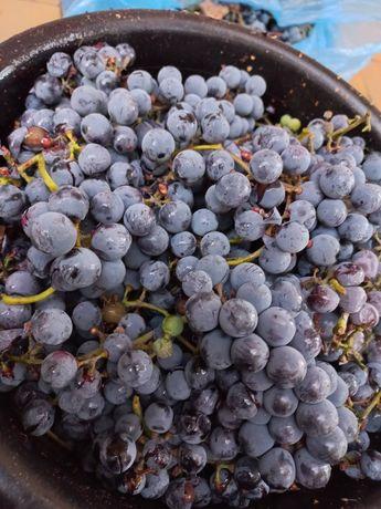 Винный виноград! Будет около 50-55 кг.