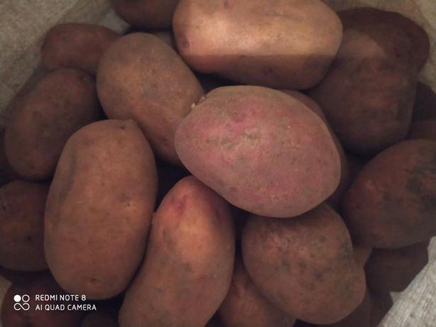 Вкусная домашняя картошка
