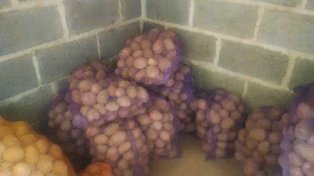 Bellaroza ziemniaki jadalne rozowe