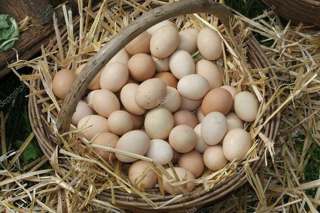 Инкубационное яйцо.Вся Украина