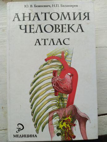 Анатомія людини на російській мові