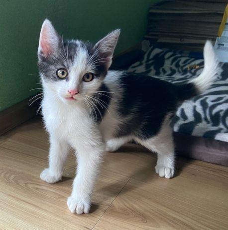 Oddam 3-miesięczne kociaki w dobre ręce (1 samiec i 1 samica)