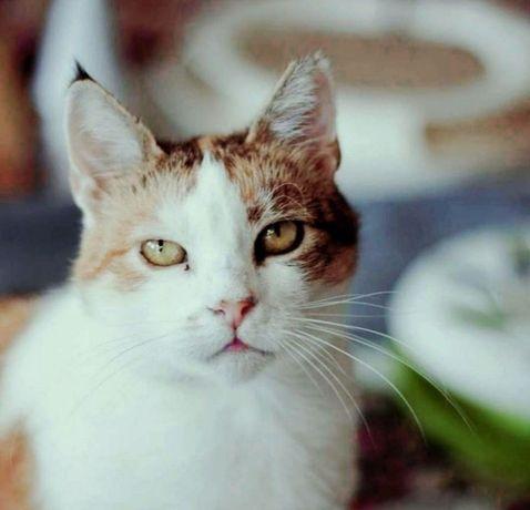Cudowna kotka Micia szuka domu