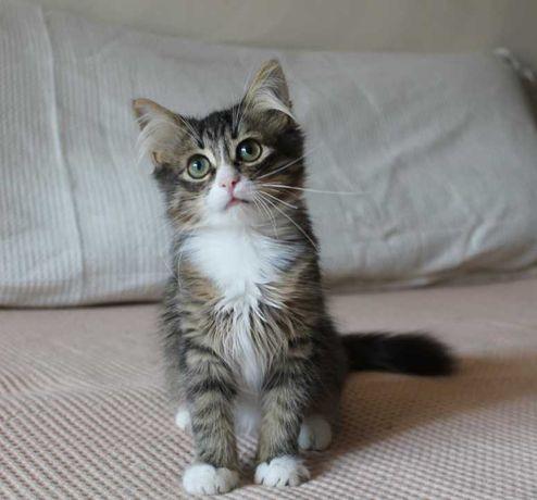 Котенок мальчик 4-5 месяцев ищет семью