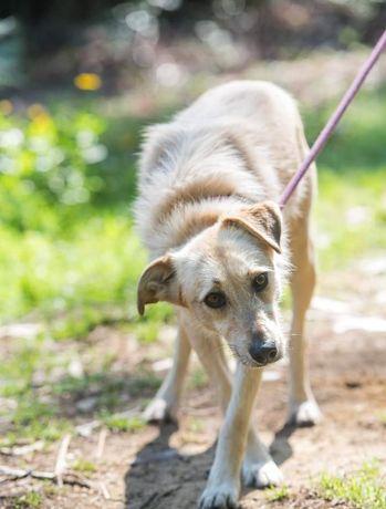 Bonnie- cachorra de porte médio para adoção