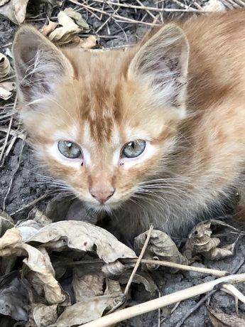 Кому котенка мальчика рыженького 3,5 мес. Срочно на счастье?!