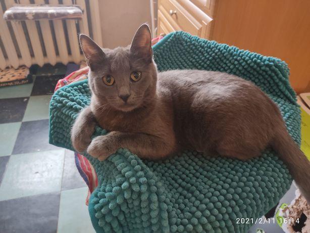 Кошка Шеба как из рекламы